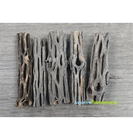 Cholla wood 7 cm
