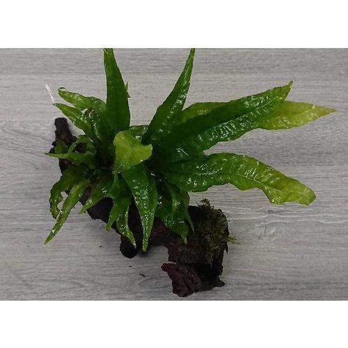 Planten op hout/mat
