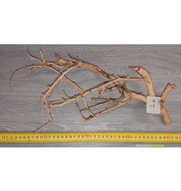Aquascaping Twig 18