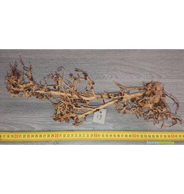 Aquascaping Twig 19