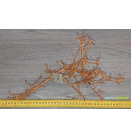 Aquascaping Twig 8