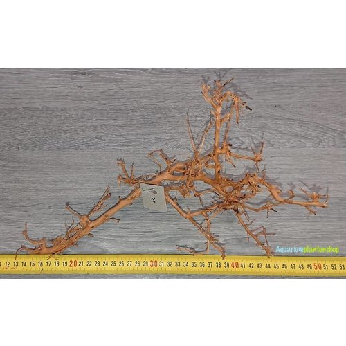 Aquascaping Twig 8