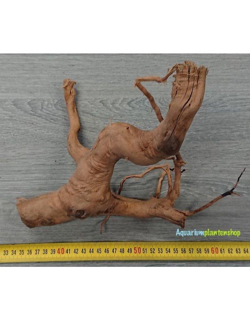 Spiderwood 31