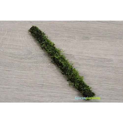 Bamboo stok met javamos 30 cm
