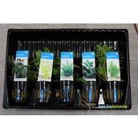 Middenzone Aquariumplanten Mix
