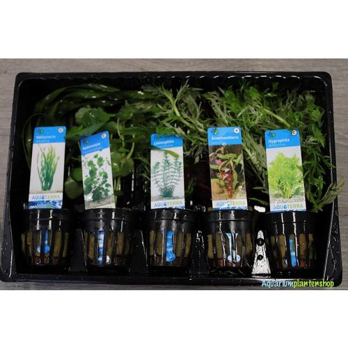 Achterzone Aquariumplanten Mix