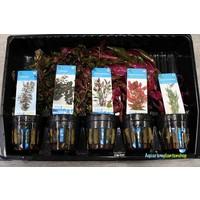 Valentijn Aquariumplanten Mix