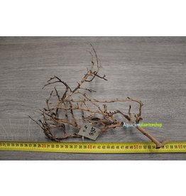 Aquascaping Twig 4