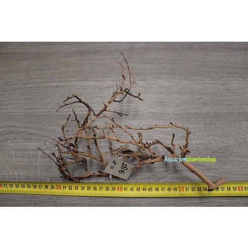 Aquascaping Twig 4