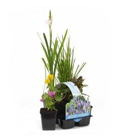 Bloeiende Planten Sixpack