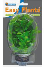 SF Easy Plants 13 cm Nr. 8