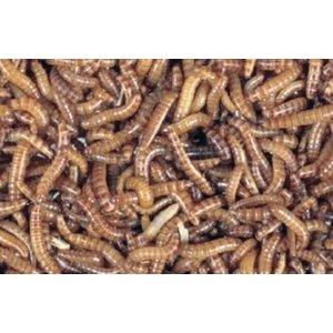 Buffaloworm