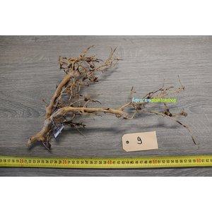 Aquascaping Twig 9