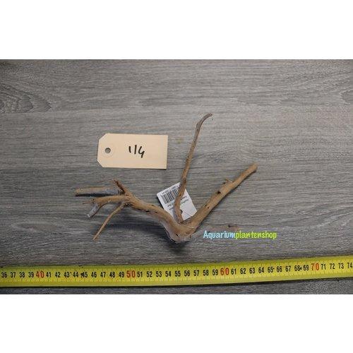 Spiderwood 114