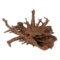 Corbo Root Small 20-30 cm
