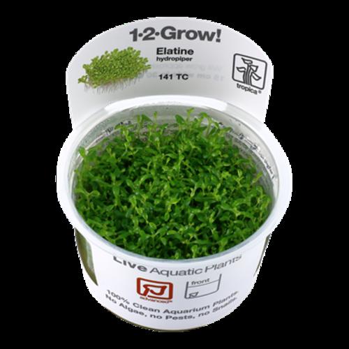 Tropica Elatine Hydropiper 1-2-Grow!