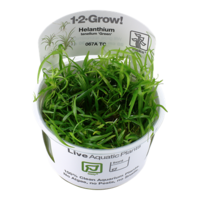 Tropica Helanthium Tenellum 'Green' 1-2-Grow!
