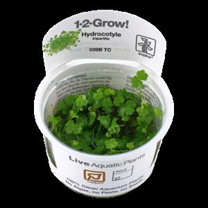 Tropica Hydrocotyle Tripartita 1-2-Grow!