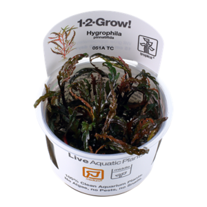 Tropica Hygrophila Pinnatifida 1-2-Grow!