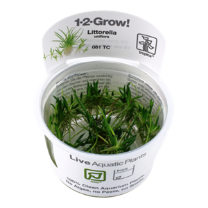 Littorella Uniflora 1-2-Grow!