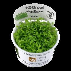 Micranthemum 'Monte Carlo' 1-2-Grow!