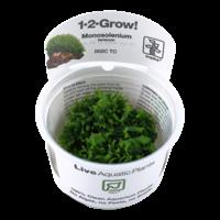 Tropica Monosolenium Tenerum 1-2-Grow!