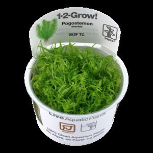 Tropica Pogostemon Erectus 1-2-Grow!