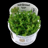 Tropica Rotala 'Bonsai' 1-2-Grow!