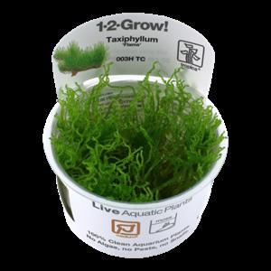 Tropica Taxiphyllum 'Flame' 1-2-Grow!