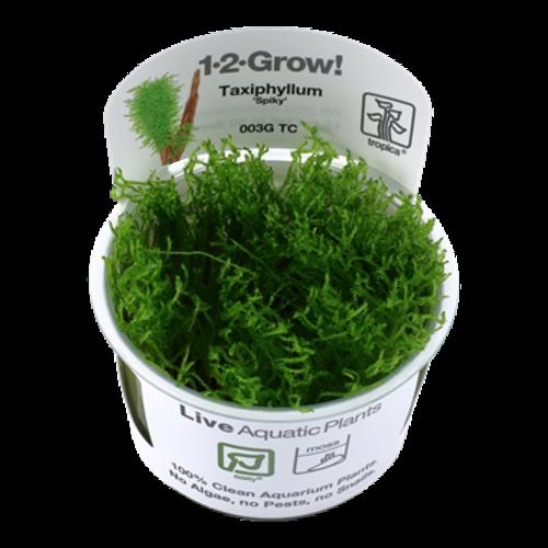 Tropica Taxiphyllum 'Spiky' 1-2-Grow!