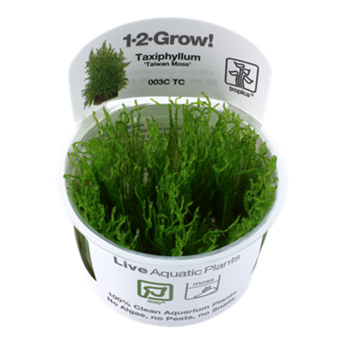 Tropica Taxiphyllum 'Taiwan Moss' 1-2-Grow!