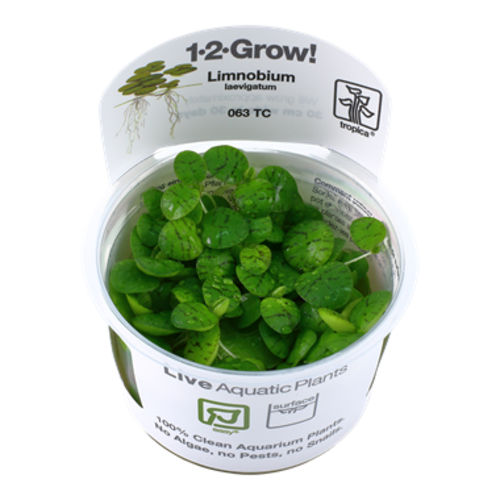Tropica Limnobium Laevigatum 1-2-Grow!