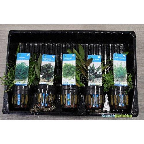 Voorzone Aquariumplanten Mix