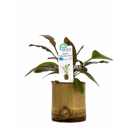 Bamboe Pot S - Echinodorus Mix
