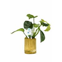 Bamboe Pot M - Anubias Mix