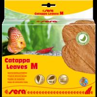 Sera Catappa Leaves M - 18 cm
