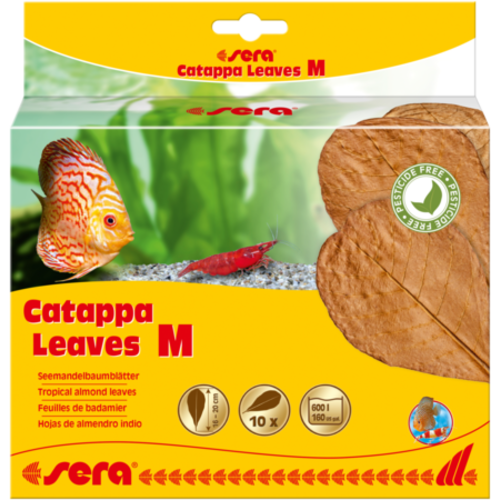 Sera Catappa Leaves M - 18 cm