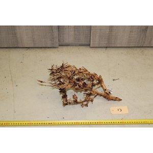 Aquascaping Twig 13