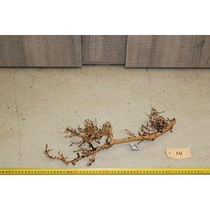 Aquascaping Twig 14