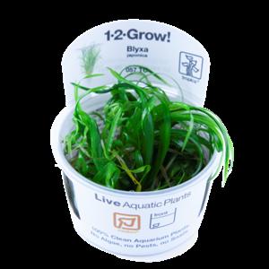 Blyxa Japonica 1-2-Grow!