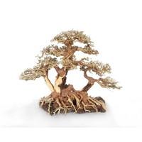 Hs Aqua Bonsai Wood With Rock M 25x18x30 cm