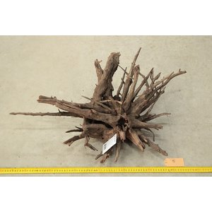 Corbo Root Large 5