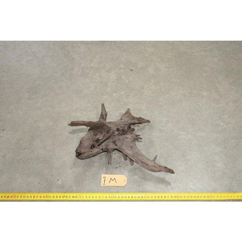 Corbo Root Medium 7