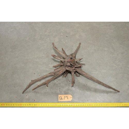 Corbo Root Medium 12