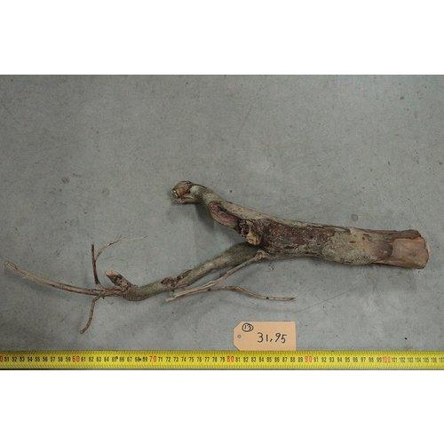 Talawa hout 13