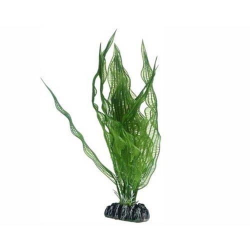 Hobby Hobby Plant Aponogeton 25 cm
