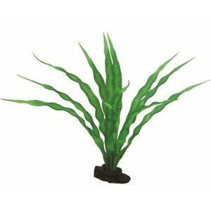 Hobby Hobby Plant Crinum 29 cm