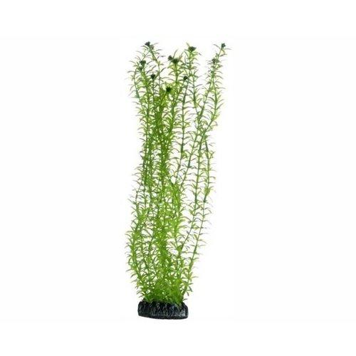 Hobby Hobby Plant Lagarosiphon 34 cm