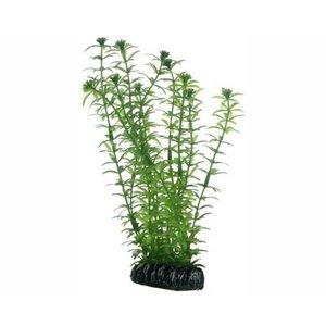 Hobby Hobby Plant Lagarosiphon 20 cm