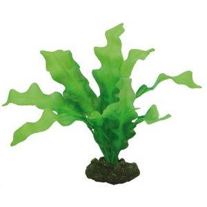 Hobby Hobby Plant Echinodorus 20 cm